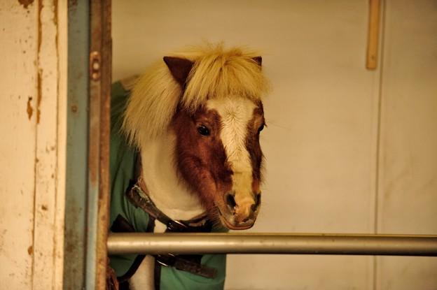 ご飯もいっぱい食べてアンニュイなミニーちゃん。なお、先月と同じ馬房ですが何かが違います。わかりますか?