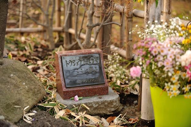 ファルコのお墓。今日もお花が手向けられています。