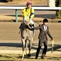 Photos: [京成杯2014]キングズオブザサン&大野