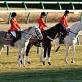 Photos: [京成杯2014]寒い中今日も頑張る誘導馬の皆さん