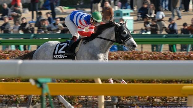 [070211東京9Rカトレア賞]直線抜け出してそのまま2馬身半つけて楽勝したドミンゴシチ―(後藤)