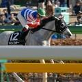 Photos: [070211東京9Rカトレア賞]直線抜け出してそのまま2馬身半つけて楽勝したドミンゴシチ―(後藤)