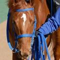 Photos: [070211東京9Rカトレア賞]ラブストラック。このお馬さんもよく遭遇しました。