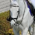 Photos: マイネルグレーカ懐かしい。誘導馬のなかでも大人しいお馬さんでした。
