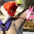Photos: 西日を背にして返し馬に入るストロベリーラン