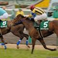 Photos: [070311中山11R中山牝馬S]ウイングレット一気に先頭を窺う勢い→最終的にサマンサが差し切りました