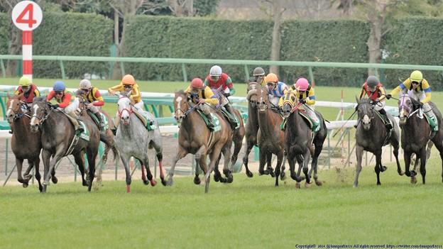 [070311中山11R中山牝馬S]アサヒライジングとウイングレット、ワディラムなどが追撃態勢、サマンサは挟まれた