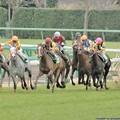 Photos: [070311中山11R中山牝馬S]アサヒライジングとウイングレット、ワディラムなどが追撃態勢、サマンサは挟まれた