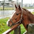 Photos: [111119]ジャッピー「あー、牝馬ちゃん帰ってもうた・・・」 #シルクジャスティス20歳おめでとう