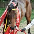 [140316中山11R中山牝馬S]凛々しく周回するフーラブライド