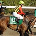 [140316中山11R中山牝馬S]終始テンパったまんまのエクセラントカーヴ。サンシャインが見守っている