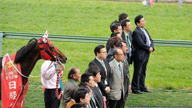 Photos: [140329中山11R日経賞]ウインバリアシオンは控えめに見守ってます。