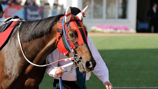 [140329中山11R日経賞]ウインバリアシオンの軽めのジロリ #ジロリ馬
