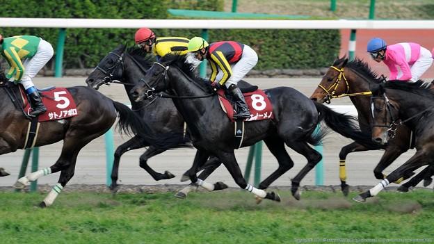 [140329中山11R日経賞]3番手追走のフェノーメノ。吹っ切れた感じで追走。