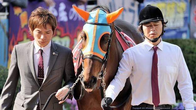 Photos: [140329中山11R日経賞]ホッコーブレーヴ「そんな渋い顔せんでよ。。」