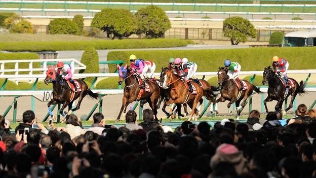 [140406阪神11R大阪杯]1周目直線、トウカイパラダイスを見ながら様子をみてる各馬