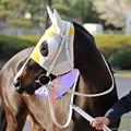 Photos: [140409船橋10RマリーンC]?レオキラメキ(浦和)。後ろのお馬さんが気になるのかな?