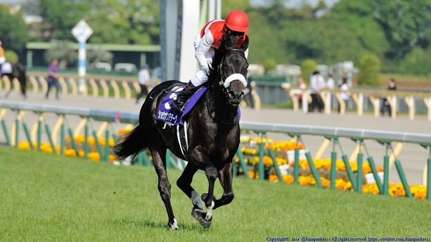 [140511東京11RNHKマイルC]ショウナンアチーヴ&戸崎。漆黒の馬体は映えますな