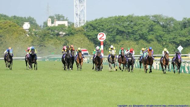 Photos: [140511東京11RNHKマイルC]100m。内でミッキーアイルが逃げ粘るところ、外からたくさんきてまったくわからない。キングズオブザサンもこじ開けてきている