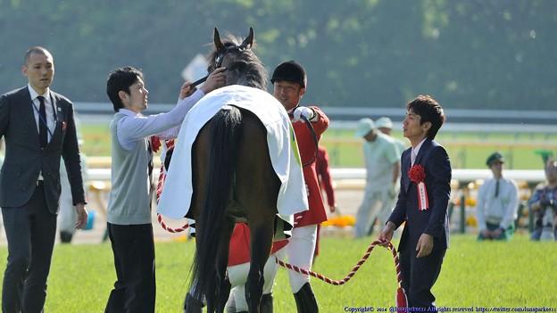[140511東京11RNHKマイルC]馬着の着替えが完了して厩務員さんにペタペタしてもらうミッキーアイル