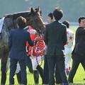 [140511東京11RNHKマイルC]馬着を直してもらっているミッキーアイル「さまになってるっしょ?」 #ジロリ馬
