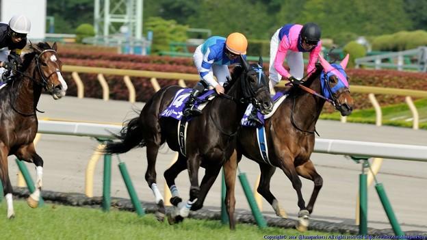[140518東京11RVM]第9回ヴィクトリアマイル優勝馬ヴィルシーナ&内田博幸 #keiba