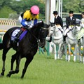 Photos: [140518東京11RVM]誘導馬さんたち「ウリウリちゃんだ!」「あれがウリウリちゃんか!」「黒光りガール!」