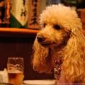 Photos: あんずちゃん「ビールのおいしい季節になってきました」
