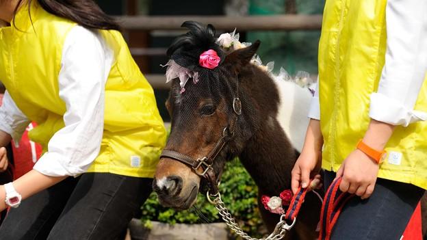 [140525東京競馬ローズガーデン]子供を見守っているようなチャッピーさん