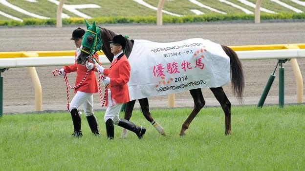 [140525東京11R優駿牝馬]ヌーヴォレコルト「なんか…みなさんごめんなさいね~」