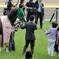 Photos: [140525東京11R優駿牝馬]ヌーヴォレコルト「なんかみなさん、まだ驚きのようですわね」