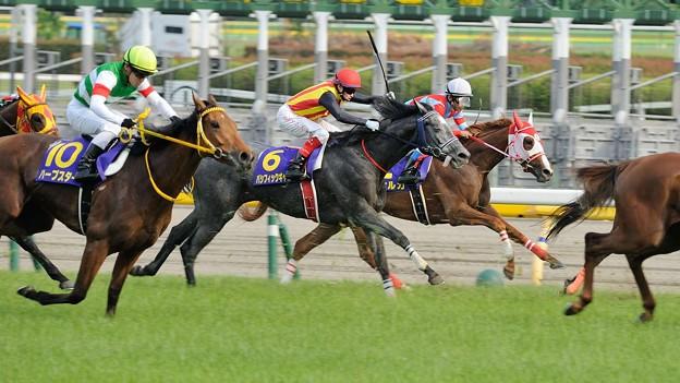 [140525東京11R優駿牝馬]坂下。ディルガはギリギリ、パシフィックギャルは一杯。ハープスター追撃開始。落鉄はまだしていない