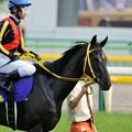 Photos: [140525東京11R優駿牝馬]サングレアル「オーラムちゃんふりきれたようね」