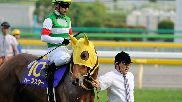 [140525東京11R優駿牝馬]ハープスター「できるだけみんなの顔見ないでおきましょ…」