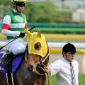 Photos: [140525東京11R優駿牝馬]ハープスター「できるだけみんなの顔見ないでおきましょ…」