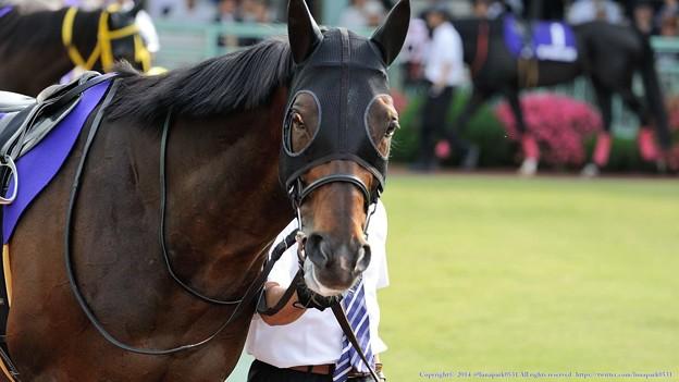 [140528浦和11Rさきたま杯]ゴールスキー「どう?ちゃんと撮ってる?」 #ジロリ馬
