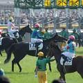 Photos: [140601東京10R東京優駿]ゲートイン前のなんだか落ち着きのないみなさん