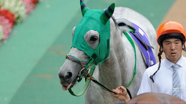 Photos: [140608東京11R安田記念][1]ホエールキャプチャ「なになに?この馬場でキャプチャは厳しいですって?。知るものですか」→