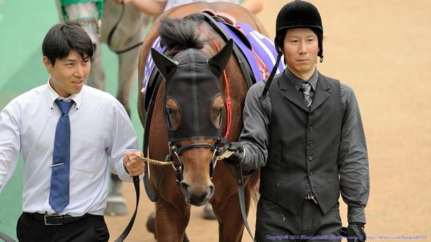 [140608東京11R安田記念]ワールドエース「見慣れない子が多いなー。これが古馬G1ですか~」