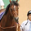 [140608東京11R安田記念]?リアルインパクト「ミッキーくんに3歳馬としての戦い方を教えてあげたい!」 #ジロリ馬