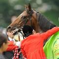 [140608東京11R安田記念]ジャスタウェイ「あーあー、そこ、シワになっちゃいます」 #ジロリ馬