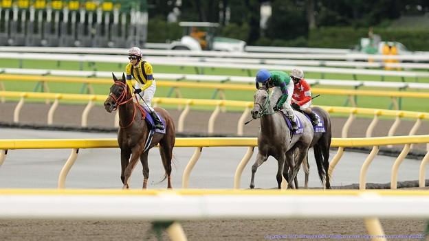 Photos: [140608東京11R安田記念]グランデッツァ「…」ホエールキャプチャ「そう、私はきっとダートでも走ってきたのよ」