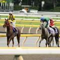 [140608東京11R安田記念]グランデッツァ「…」ホエールキャプチャ「そう、私はきっとダートでも走ってきたのよ」