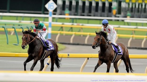 [140608東京11R安田記念]リアルインパクト「厳しいわぁ」ミッキーアイル「リアルインパクトさんよくこんなレース勝てましたね」