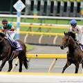 Photos: [140608東京11R安田記念]リアルインパクト「厳しいわぁ」ミッキーアイル「リアルインパクトさんよくこんなレース勝てましたね」