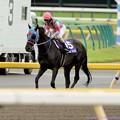 Photos: [140608東京11R安田記念]サダムパテック「結局、馬場でもみんなのお尻ばかりみてた…」