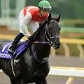 [140608東京11R安田記念]ショウナンマイティ&北村宏。「どうよ、ようやく玲奈ちゃんじゃなくて俺の漆黒の馬体を見てくれるようになったな」