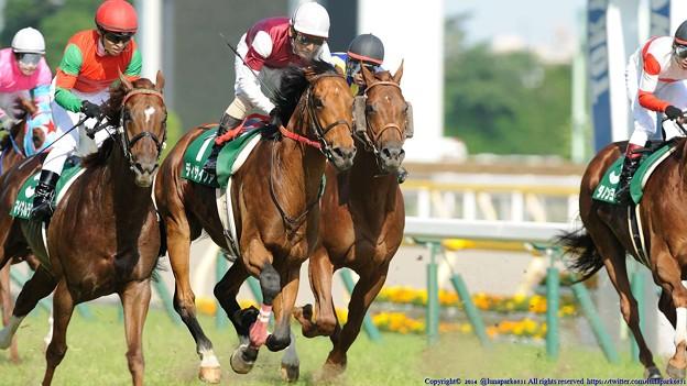 [140615東京11RエプソムC]ダークシャドウ「誰か間違えてるかもしれないから勝った馬と同じ顔しておこう」マイネルラクリマ「俺もやっとこ!」ディサイファ「...」