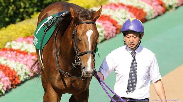 Photos: [140615東京11RエプソムC]ゴールデンナンバーちゃん「そうそう、オトコなんてみんなこんなもんよ」