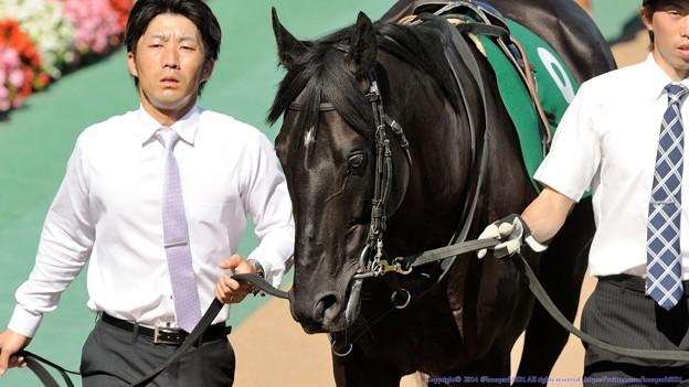 Photos: [140615東京11RエプソムC]トーセンジャガー「栗毛と青鹿毛が結婚したら、産まれてくる仔馬の毛色は、と…(ブツブツ」